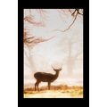 deer wildlife stag