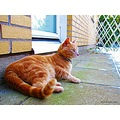 Warm Cat Cezar Birdwatcher Winter 2012 December Skane Sweden