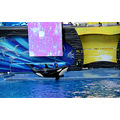 seaworld orlando florida show entertainer killer whale shamu