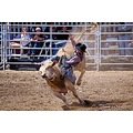 PBR Bullriding Pala Action Pankey Wildspirit sports Elliott Bull