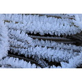 Frost Ice Crystals HoarBurnaby Lake