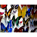 BUTTERFLY CONFERENCE--By the way...confer with me at my new Social Network site along with other ...
