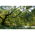 willow tree rosemoor devon