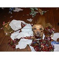 Dixie had fun with the paper