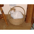 cat basket mypetfriday