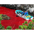 Stop the dolphin murder ! Open your eyes to the truth !