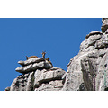 mountain goats ElTorcal andalucia home spain compthree