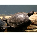 switzerland basel zoo animal turtle switx basex zoox animx turtx