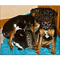 worldpeacefriday cats dogs puppy kitten