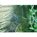 frog amphibian nature blue