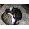 Cats love sleep together alghero
