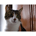 Closeup Friendly Cat Lubranco Lubranco2008