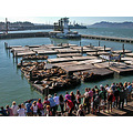 sfharborfph3 pier39 sanfrancisco waterfront sealions