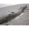 Driftwood with shadow of log