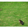 Cats My back yard Littleollie