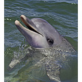 Dolphin porpoise animal mammal nature wildlife sealifed