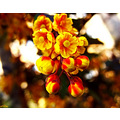 flower colours macro archer