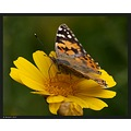 Same butterfly, a different angle...  Try the original view