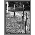 nature tree grass bush pylons fence road abstract closeup dof bw