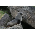 sealions penguins sea water sand dunedin nzshutter