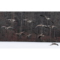 geese hunting outdoors snow winter canada goose waterfowl ducks