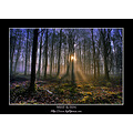 Mist Forest Trees Ireland Irish Landscape Paths Leafs Rays Fog Laois Stradbally