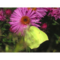 Series Nature Butterflies