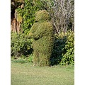 Bear Hedge. Edendale, Southland, New Zealand.