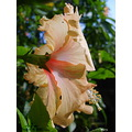 thailand landscape morning poulets 2007 nature flower macro