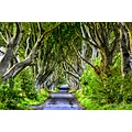 dark hedges antrim ireland joeormondephotography