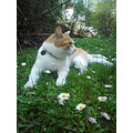 max cat animal flower spring