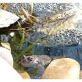 animalfriday animal frog aquatic water pond