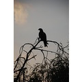 eagle silhouette nature evening light