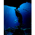 underwater deep sea Green turtle coral blijdorp zoo light