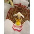 orchid close up happy man white eagle abowe
