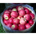 Apples anyone?  Don't they look wonderful?