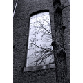 Church reflection window tree
