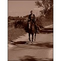 landscape nature horseman horse road bush tree sky clouds sepia