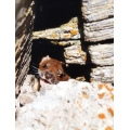 Animal Animals Weasel Switzerland
