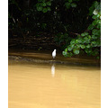 zuiderdam cruise puertolimon costarica jungle river bird reflection