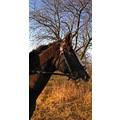 nature animal horse portrait tree field wilderness winter