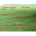 Birthday wishes Sarina Wildspirit Charlotte magentastar aztec xsea