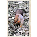 squirrel animal