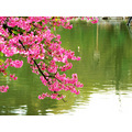 flower flowers nature water lake park pink
