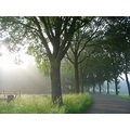 landscape holland fog foggy