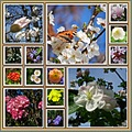 collage2friday funfriday springtime flowers Geneva