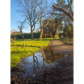 park spring tree trees puddle water reflection