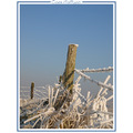snow ice winter januari landscape nature holland CH1988