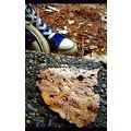 blue converse spring in summer