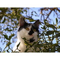 cat green look animal portrait